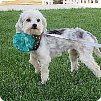 Adopt A Pet :: **CHARLIE** - Stockton, CA