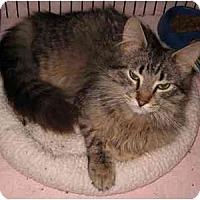 Adopt A Pet :: Tynan - Colmar, PA