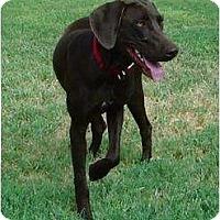Adopt A Pet :: Godiva - Arlington, TX