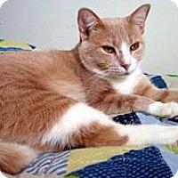Adopt A Pet :: Sandie - Alexandria, VA