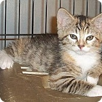 Adopt A Pet :: Aliza - Acme, PA