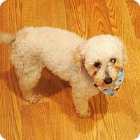 Adopt A Pet :: Evie - Prole, IA