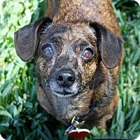 Adopt A Pet :: Kloe -