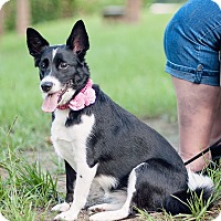 Adopt A Pet :: Macy - Kingwood, TX
