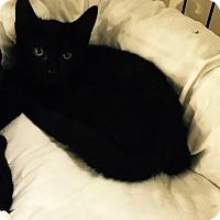 Adopt A Pet :: Harwin - Speonk, NY