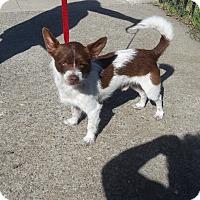 Adopt A Pet :: Rudy - Lodi, CA