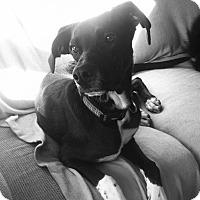 Adopt A Pet :: Luna - Grand Rapids, MI