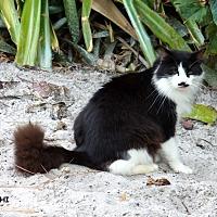Adopt A Pet :: Roshi - Bonita Springs, FL