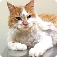 Adopt A Pet :: Sutter - Davis, CA