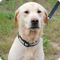 Adopt A Pet :: Sherman - Minneola, FL