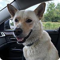 Adopt A Pet :: Lucky - Detroit, MI