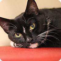 Adopt A Pet :: Emily - Richmond, VA
