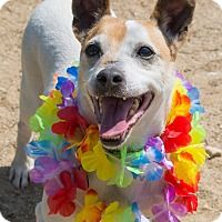 Adopt A Pet :: Walter - Grayslake, IL