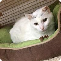 Adopt A Pet :: Ebenezer - Wayne, PA