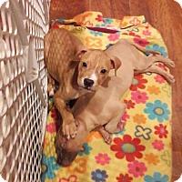 Adopt A Pet :: King - Centerburg, OH