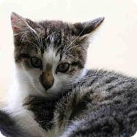 Adopt A Pet :: ELEVEN - Scotia, NY