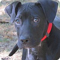 Adopt A Pet :: Buddy - Foster, RI