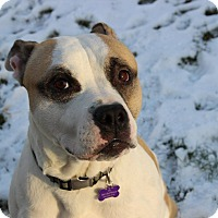 Adopt A Pet :: Macho - Huntington, NY