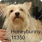 Adopt A Pet :: Honey Bunny