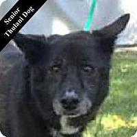 Adopt A Pet :: Harper T. - Cupertino, CA