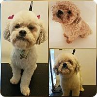 Adopt A Pet :: Lola - Winder, GA