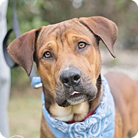 Adopt A Pet :: Bruno - Kingwood, TX