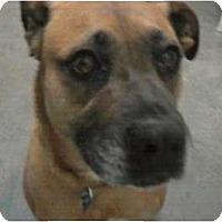 Adopt A Pet :: Laverne - Reno, NV