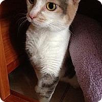 Adopt A Pet :: Miranda - Byron Center, MI