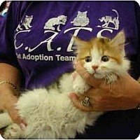 Adopt A Pet :: Cleo - Riverside, RI