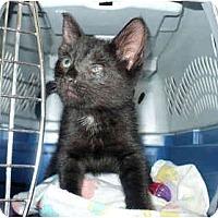 Adopt A Pet :: Snuggles - Colmar, PA