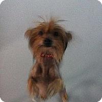 Adopt A Pet :: Zelda - Westpark, OH
