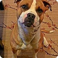 Adopt A Pet :: Dax - Owasso, OK