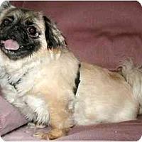 Adopt A Pet :: Suki - Mays Landing, NJ