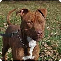 Adopt A Pet :: Red - Chicago, IL