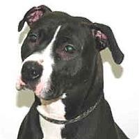 Adopt A Pet :: Zelda - Port Washington, NY