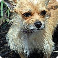 Adopt A Pet :: Luke-Adoption pending - Bridgeton, MO