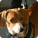 Adopt A Pet :: Longfellow