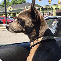 Adopt A Pet :: Smokey - Richmond, VA