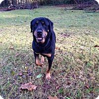 Adopt A Pet :: Chucky - Rexford, NY