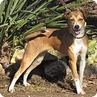 Adopt A Pet :: Skippy - Oakland, AR