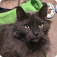Adopt A Pet :: Freddy - Lombard, IL