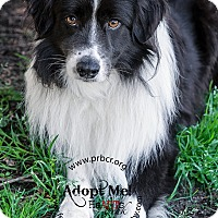 Adopt A Pet :: Kieran - All Cities, SC