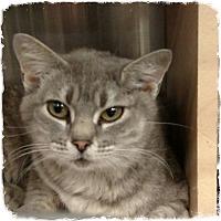 Adopt A Pet :: Rexcella - Pueblo West, CO