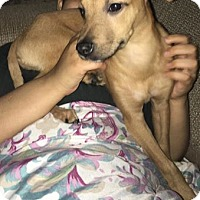 Adopt A Pet :: Hope 2 in CT - Manchester, CT
