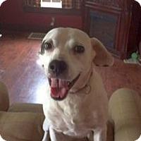 Adopt A Pet :: Annabella - Columbus, OH