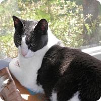 Adopt A Pet :: Mika - River Edge, NJ