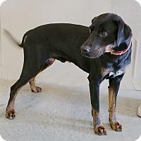 Adopt A Pet :: Bud - Urbana, OH