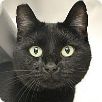 Adopt A Pet :: *HEATHER - Las Vegas, NV