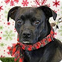 Adopt A Pet :: Conway - Wenatchee, WA