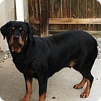 Adopt A Pet :: Chica - Stuart, VA